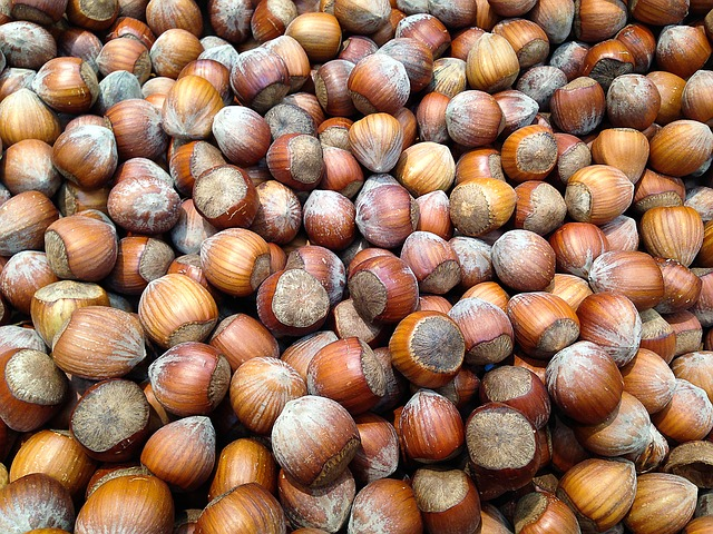 Hazelnuts are safe for parrots, but should be fed sparingly to most parrot species, or as treats due to their high fat content