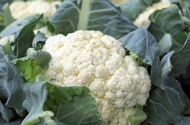 Cauliflower for parrots