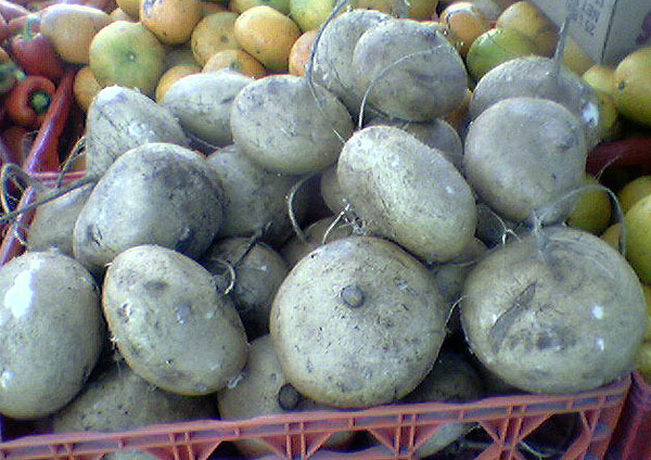 Jicama, Mexican turnip
